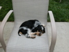 Richie_asleep_on_chair